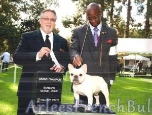 Creating French Bulldog Grand Champions